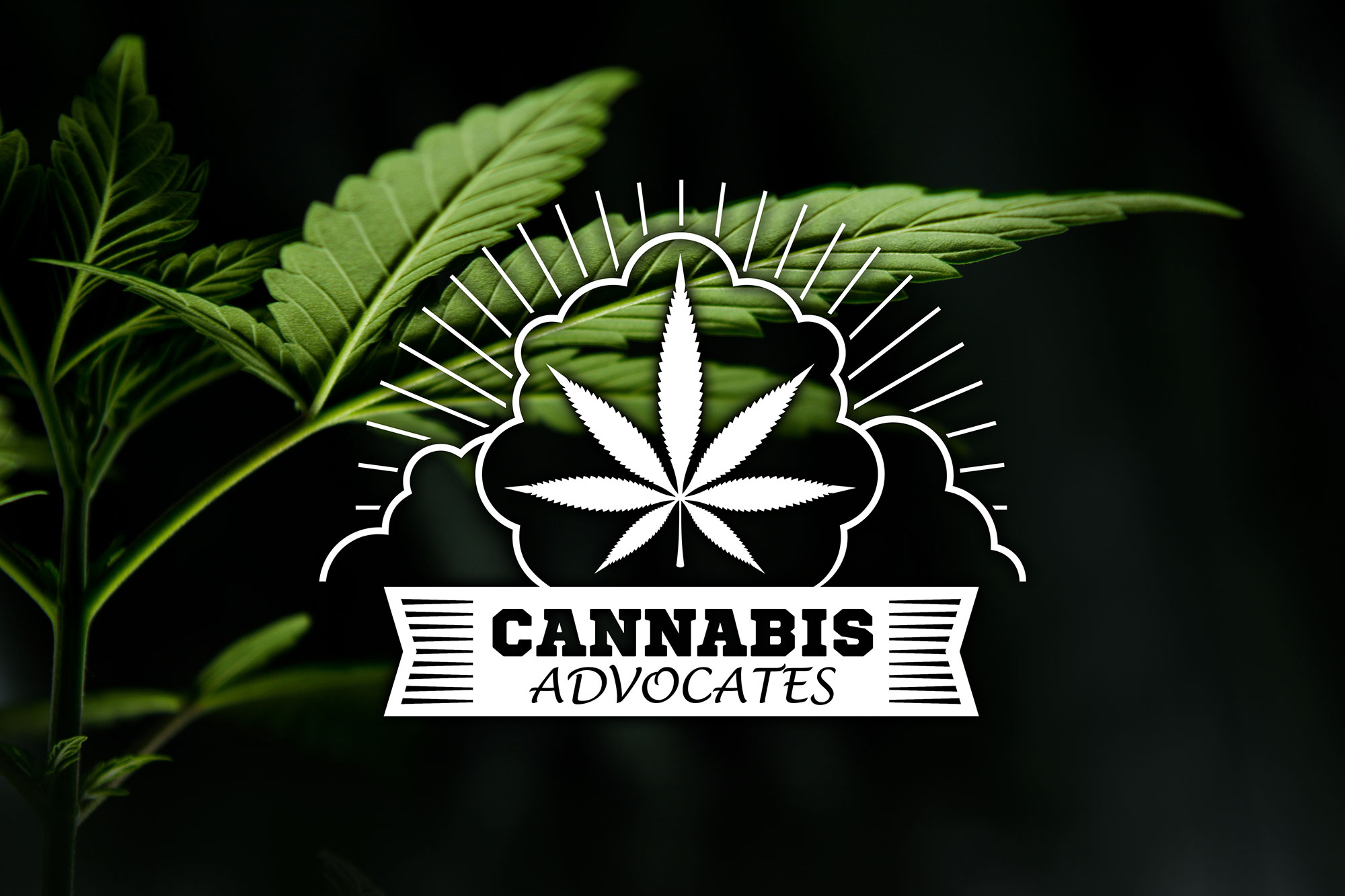 cannabis-advocates